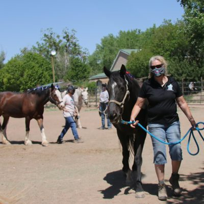 Safety Protocols and Guidelines for returning to Riding Lessons
